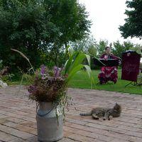 2012 08 11 Hochzeit Hotzanhof Blumen und Katze-