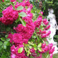 09-06-27 BlA tenpracht in der Rosenvilla zu Paretz